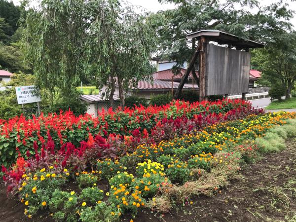 花壇の活動報告_d0322040_10020763.jpg