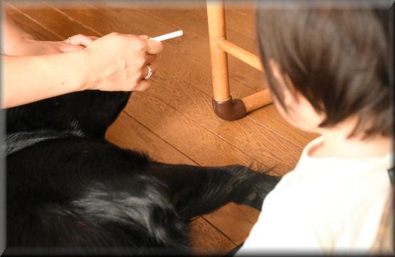 歯磨き、しゅっしゅ・・・_f0363141_08031161.jpg