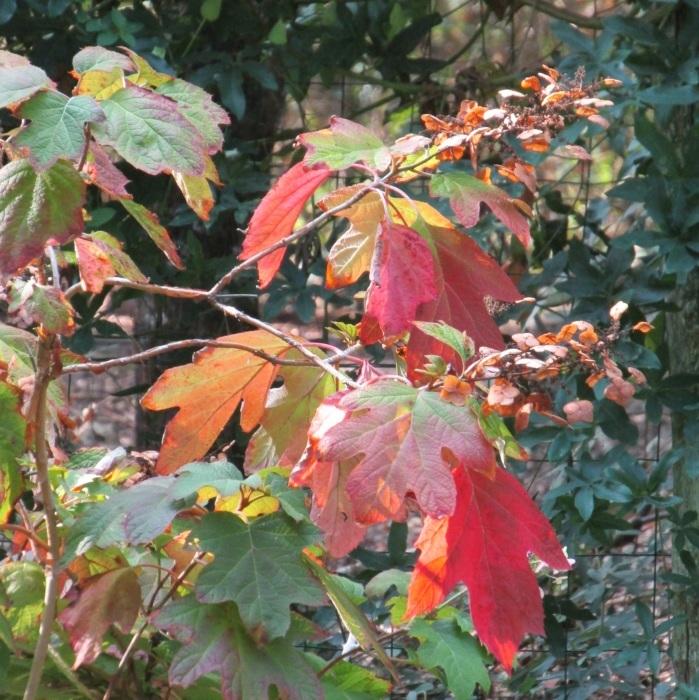 紅葉 始まる …… 。_b0287748_02250471.jpg