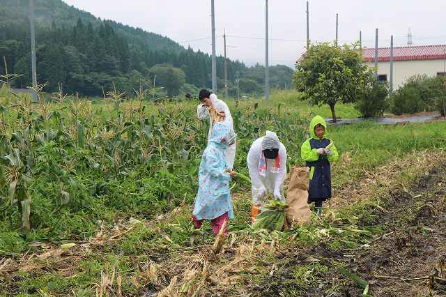 9月1日 ひるぜん農園  無料トウモロコシ狩り_f0340155_17330609.jpg