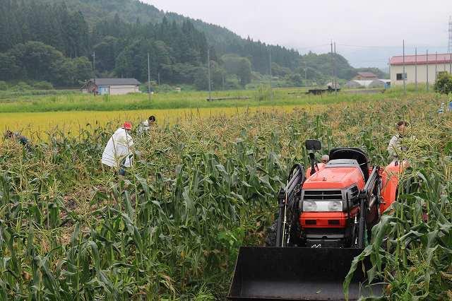 9月1日 ひるぜん農園  無料トウモロコシ狩り_f0340155_17331290.jpg