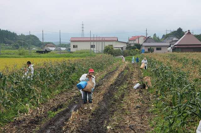 9月1日 ひるぜん農園  無料トウモロコシ狩り_f0340155_17331965.jpg