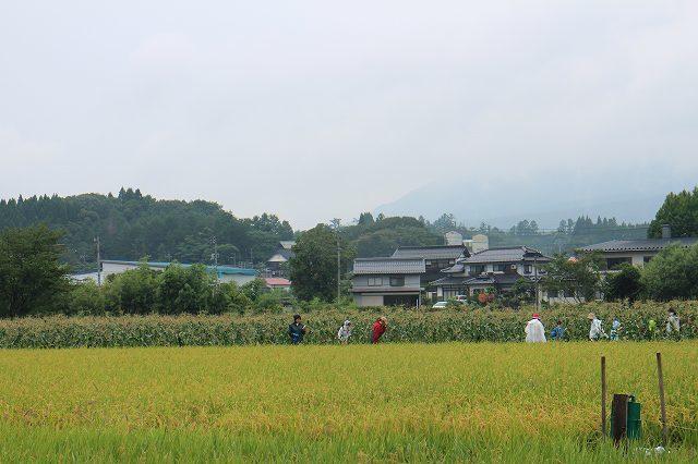 9月1日 ひるぜん農園  無料トウモロコシ狩り_f0340155_17332623.jpg