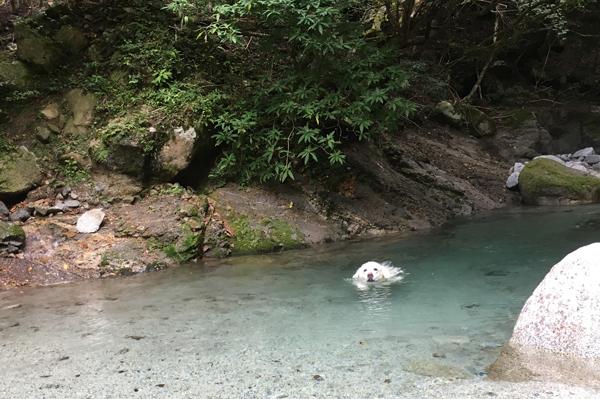 綺麗な川独り占め!_c0110361_15214091.jpg