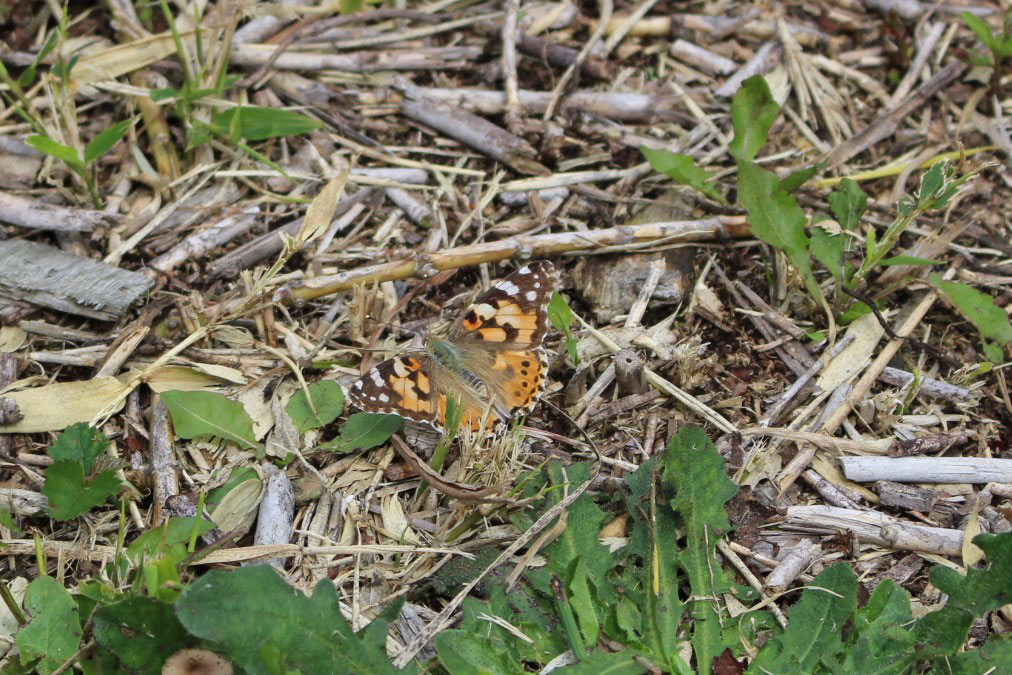 キバナオニグモが我が家の庭に…_b0025008_1648448.jpg