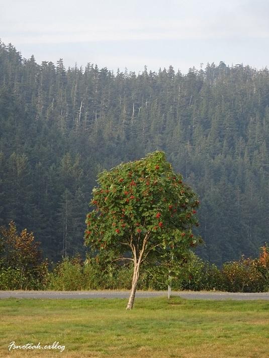 この木 実り_d0356844_12075593.jpg