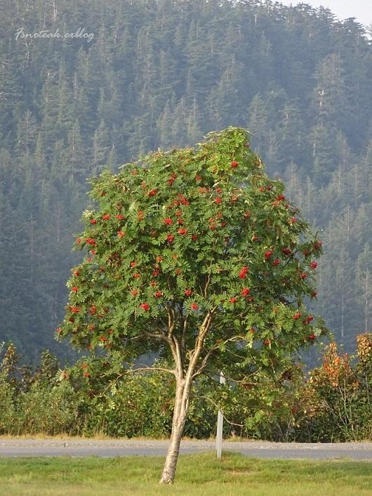この木 実り_d0356844_12133347.jpg