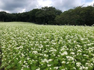 ソバの花満開♪_f0019247_22342222.jpg