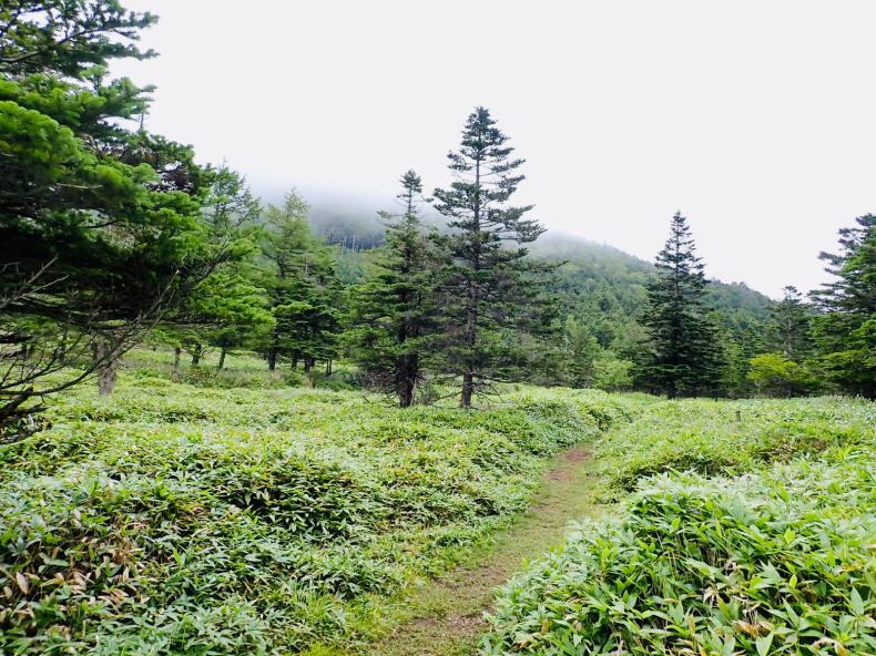 「蓼科山」「北横岳」結局登らない山歩き_b0404748_10044795.jpg