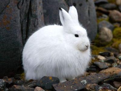 カンジキウサギのパシリ/長いあいだカンジキウサギをやっているとウザいことだらけ カンジキウサギのウザいが肝心な話_c0109850_23530859.jpg