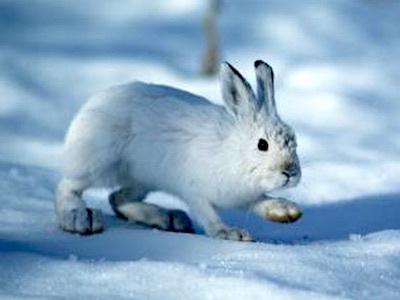 カンジキウサギのパシリ/長いあいだカンジキウサギをやっているとウザいことだらけ カンジキウサギのウザいが肝心な話_c0109850_23531916.jpg
