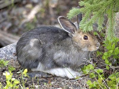 カンジキウサギのパシリ/長いあいだカンジキウサギをやっているとウザいことだらけ カンジキウサギのウザいが肝心な話_c0109850_23533737.jpg