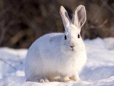 カンジキウサギのパシリ/長いあいだカンジキウサギをやっているとウザいことだらけ カンジキウサギのウザいが肝心な話_c0109850_23540241.jpg