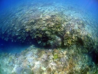 「サンゴ調査!!」_b0033573_11304967.jpg
