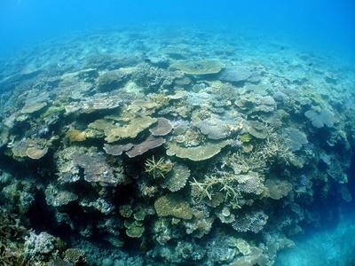 「サンゴ調査!!」_b0033573_11310337.jpg