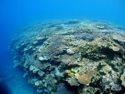 「サンゴ調査!!」_b0033573_11311321.jpg