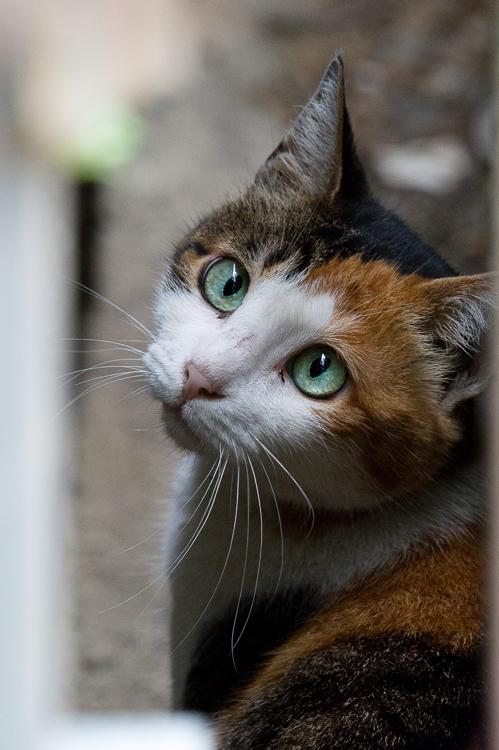 妙齢の猫_e0123176_20102013.jpg