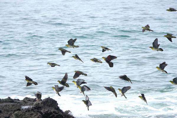 アオバト海岸_a0143780_14364823.jpg
