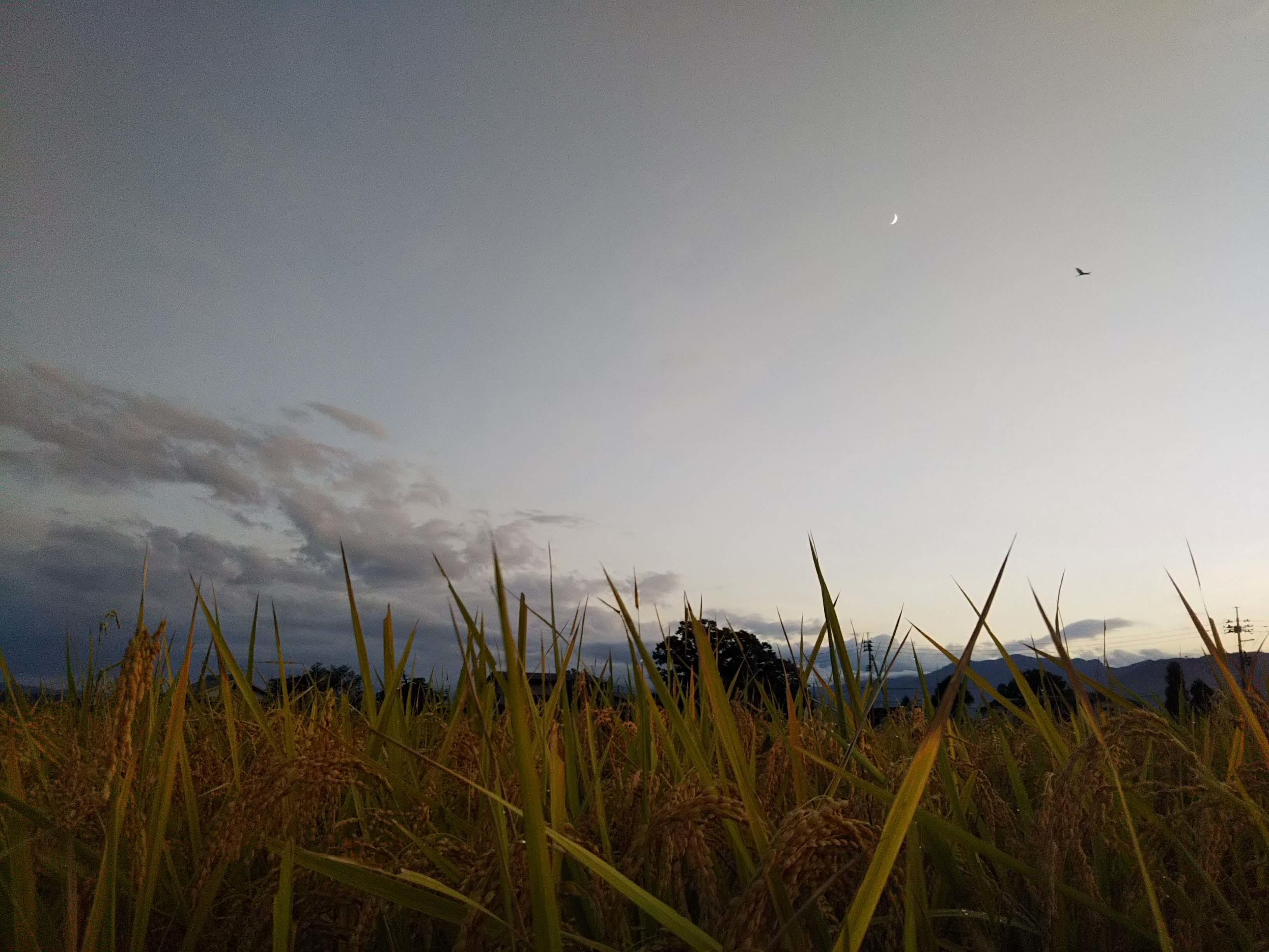めずらしく、夕日のある夕方。西の空の三日月。_b0126182_09214499.jpg