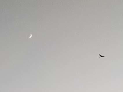 めずらしく、夕日のある夕方。西の空の三日月。_b0126182_09224371.jpg