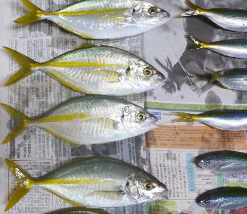 静岡にて釣りに興じる。_c0334705_02312367.jpg