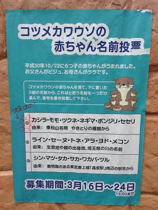 命名!コツメカワウソの六つ子たち(埼玉県こども動物自然公園)_b0355317_22345756.jpg
