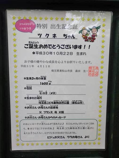 命名!コツメカワウソの六つ子たち(埼玉県こども動物自然公園)_b0355317_22405510.jpg