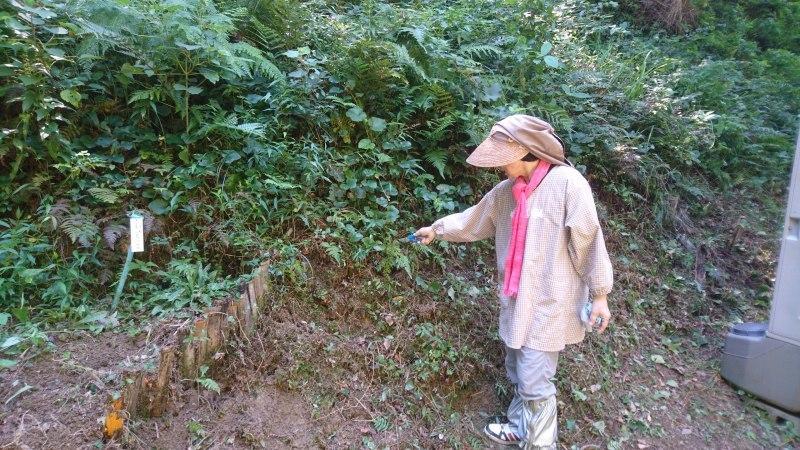 草刈りと苔玉作りワークショップ_c0239329_01202978.jpg