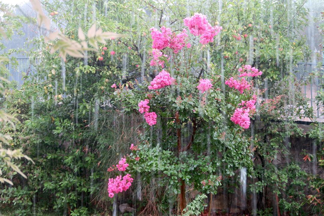 雨降ればひんやり そしてポルチーニ_f0234936_540971.jpg