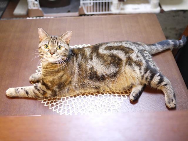猫のお留守番 モルディブちゃん編。_a0143140_23471813.jpg