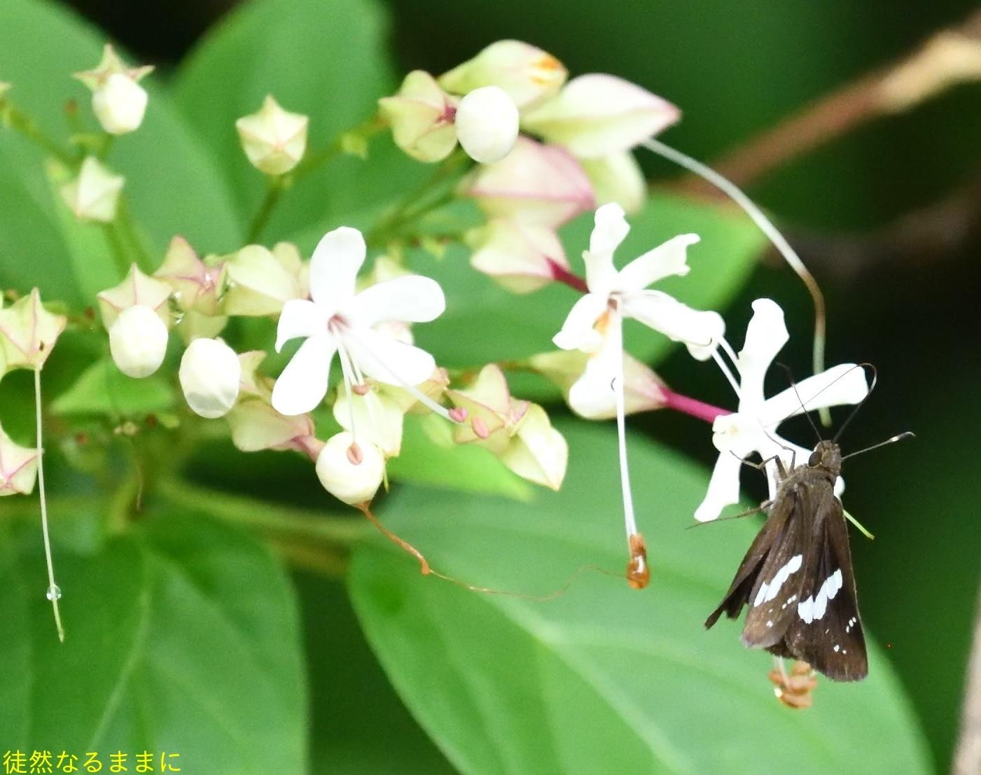 天草の蝶たち_d0285540_20270822.jpg