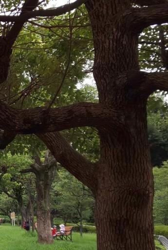 山田パンダ感激❗️コボちゃんとミホちゃんの公園デート💛_b0096957_14412605.jpg