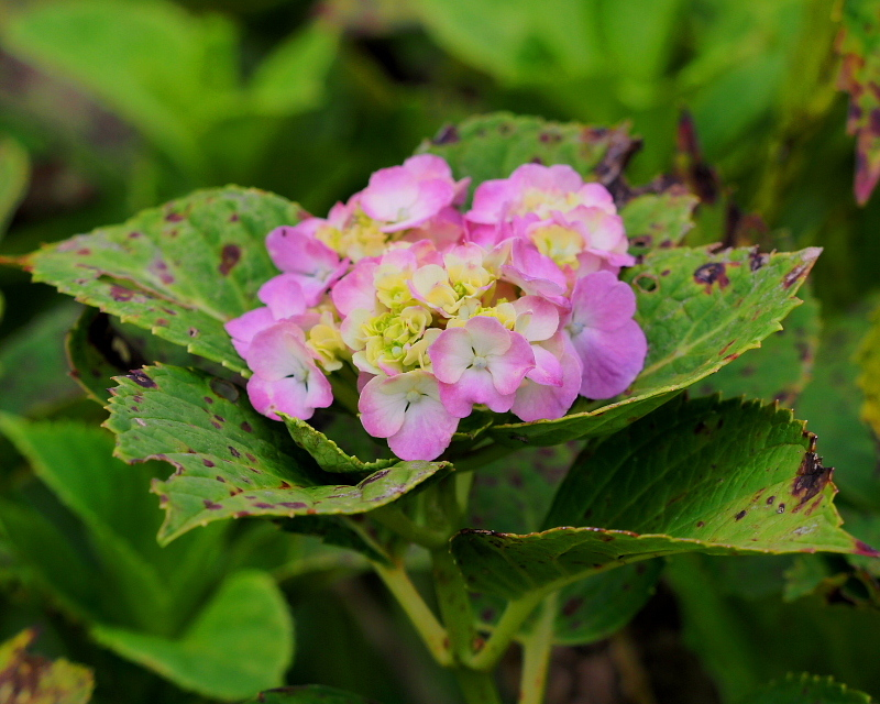 閑散としてた丹生湖で 花や虫_c0305565_17385619.jpg