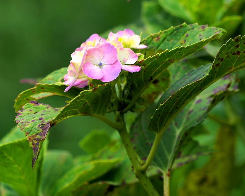閑散としてた丹生湖で 花や虫_c0305565_17393109.jpg