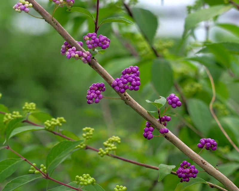 閑散としてた丹生湖で 花や虫_c0305565_17394506.jpg