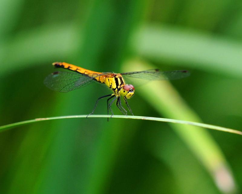 閑散としてた丹生湖で 花や虫_c0305565_17413380.jpg