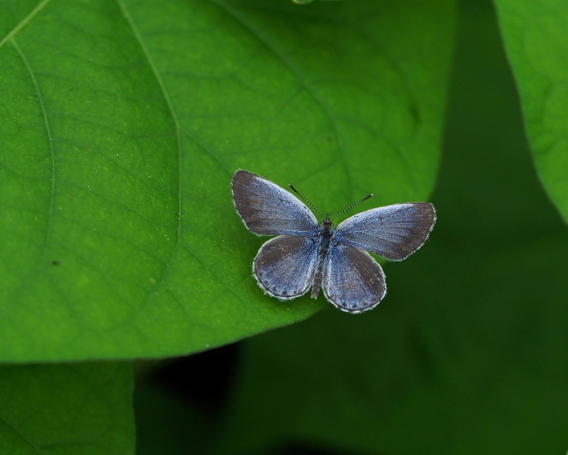 閑散としてた丹生湖で 花や虫_c0305565_17421019.jpg