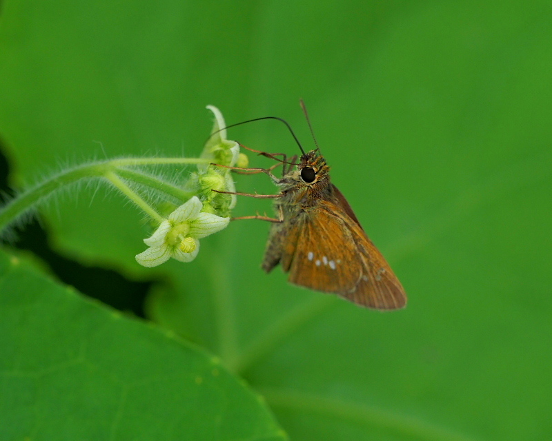 閑散としてた丹生湖で 花や虫_c0305565_17422238.jpg