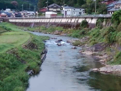 2019/9/5   水位観測  (槻の木橋より)_b0111189_05341913.jpg