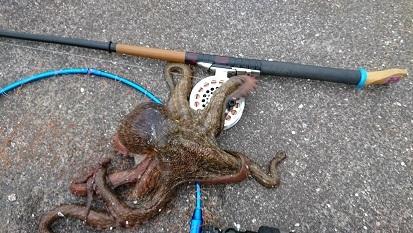 ★地続き堤防へチ釣りで真タコ釣れた★_e0147297_15200201.jpg