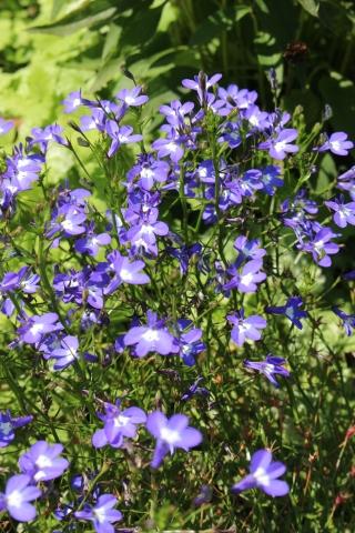 青い花ばかり&乳がん検診_e0341606_19182200.jpg