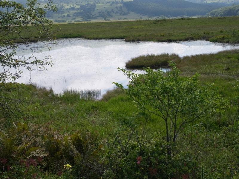 霧ヶ峰 八島ヶ原湿原の植物 1_e0276411_19085519.jpg