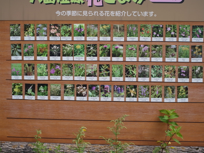 霧ヶ峰 八島ヶ原湿原の植物 1_e0276411_19314661.jpg
