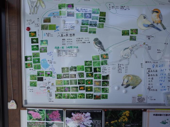 霧ヶ峰 八島ヶ原湿原の植物 1_e0276411_19315362.jpg