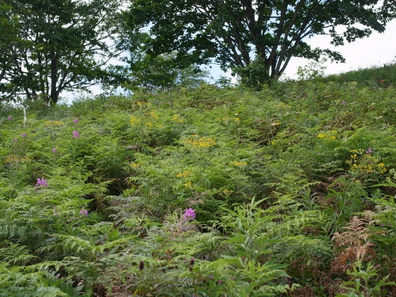霧ヶ峰 八島ヶ原湿原の植物 2_e0276411_20091358.jpg