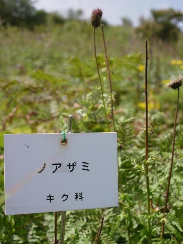 霧ヶ峰 八島ヶ原湿原の植物 2_e0276411_20093272.jpg