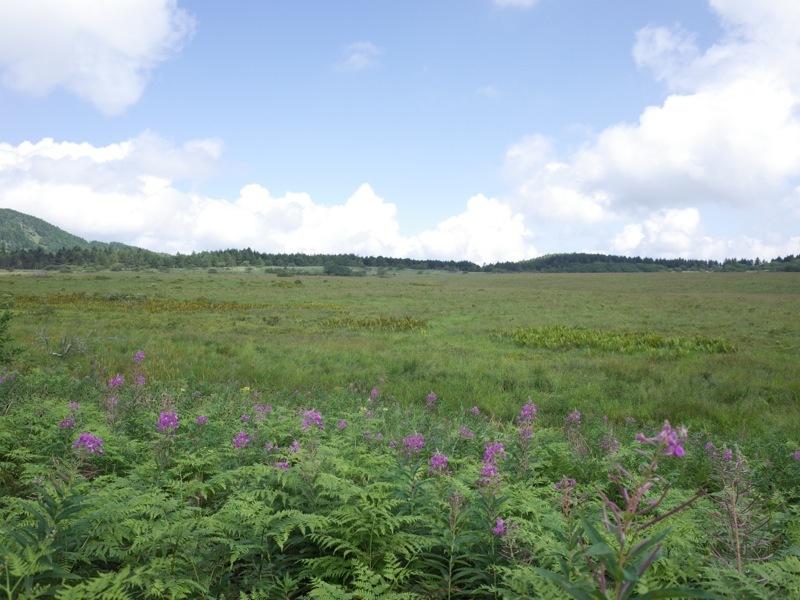 霧ヶ峰 八島ヶ原湿原の植物 2_e0276411_20100447.jpg
