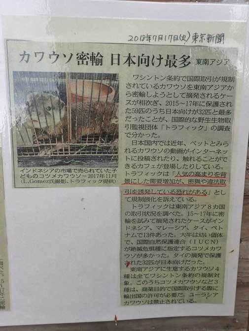 走れ!六つ子たち!!~コツメカワウソの明日はどっちだ!?(埼玉県こども動物自然公園)_b0355317_21153586.jpg