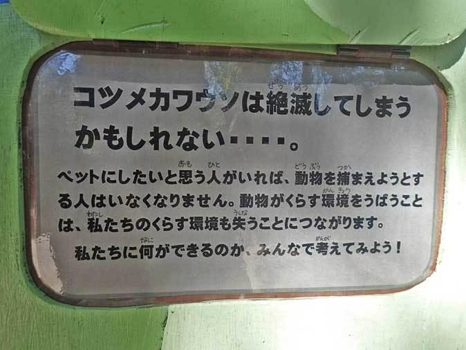 走れ!六つ子たち!!~コツメカワウソの明日はどっちだ!?(埼玉県こども動物自然公園)_b0355317_21491910.jpg
