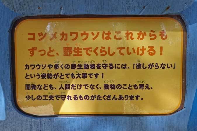 走れ!六つ子たち!!~コツメカワウソの明日はどっちだ!?(埼玉県こども動物自然公園)_b0355317_21500185.jpg